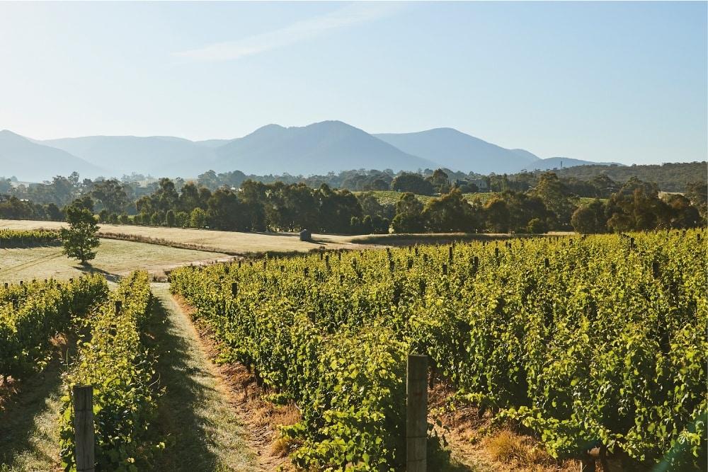 Vintrace Winery Branding